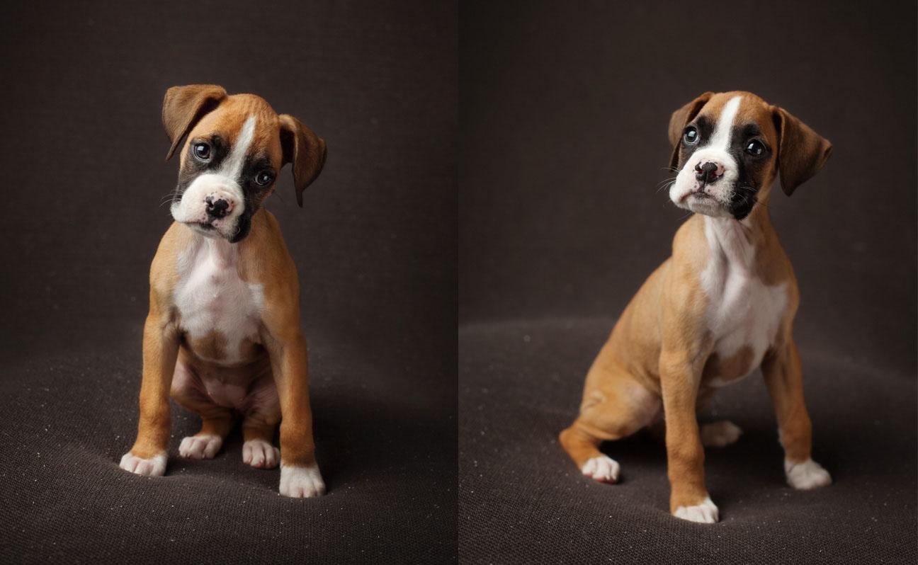 Tulsa-Dog-Photography-Pet-Portraits