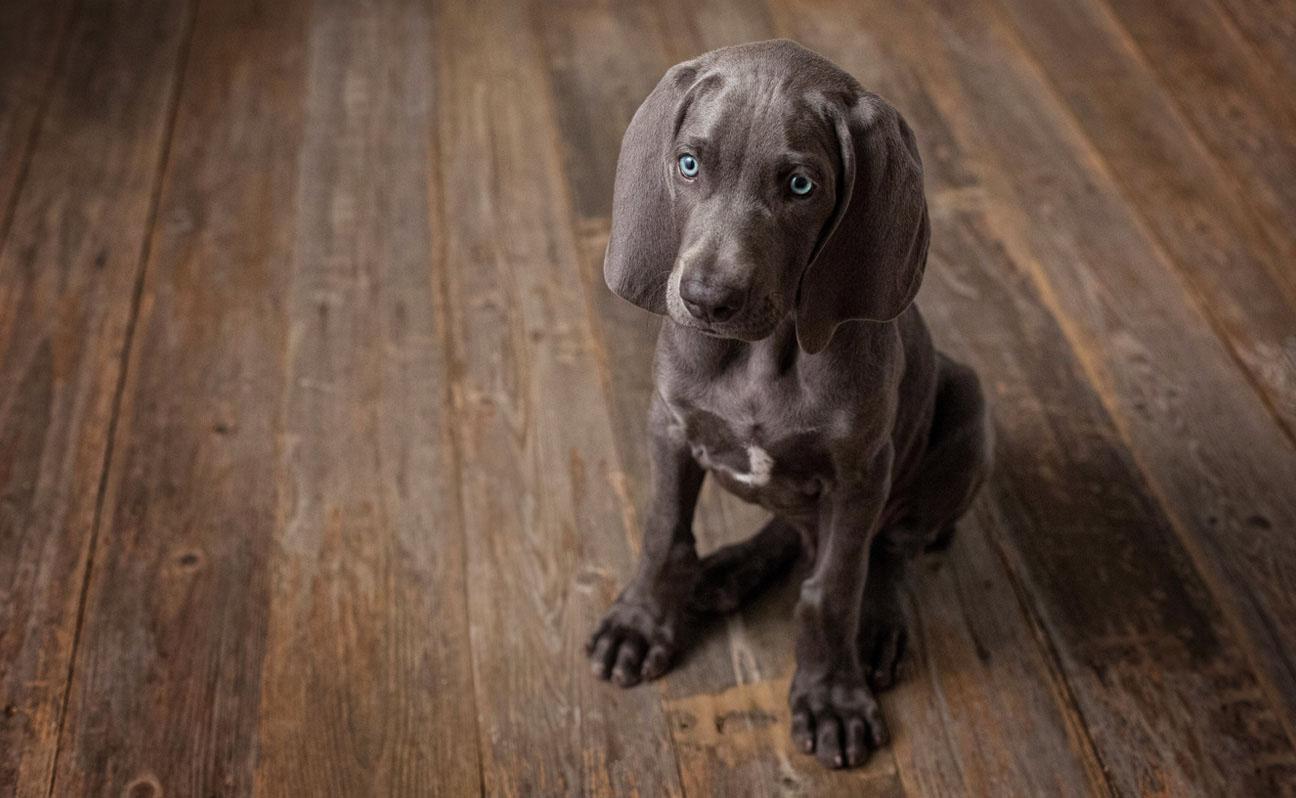 Tulsa-Dog-Portrait-Photography-2