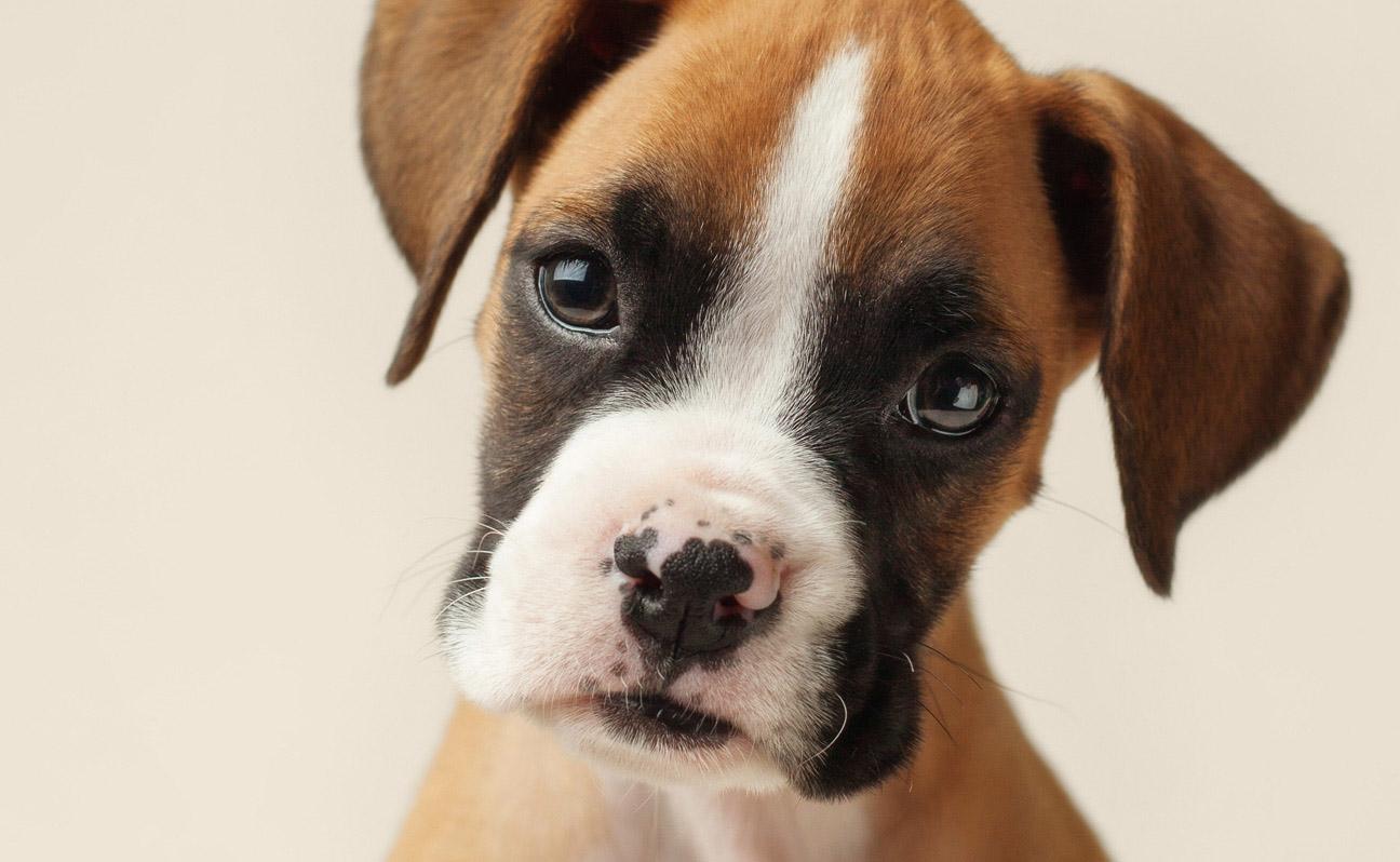 Tulsa-Dog-Portrait-Photography