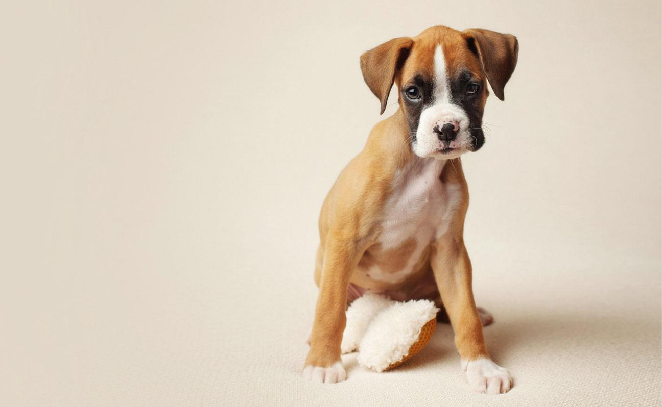 Tulsa-Pet-Photography