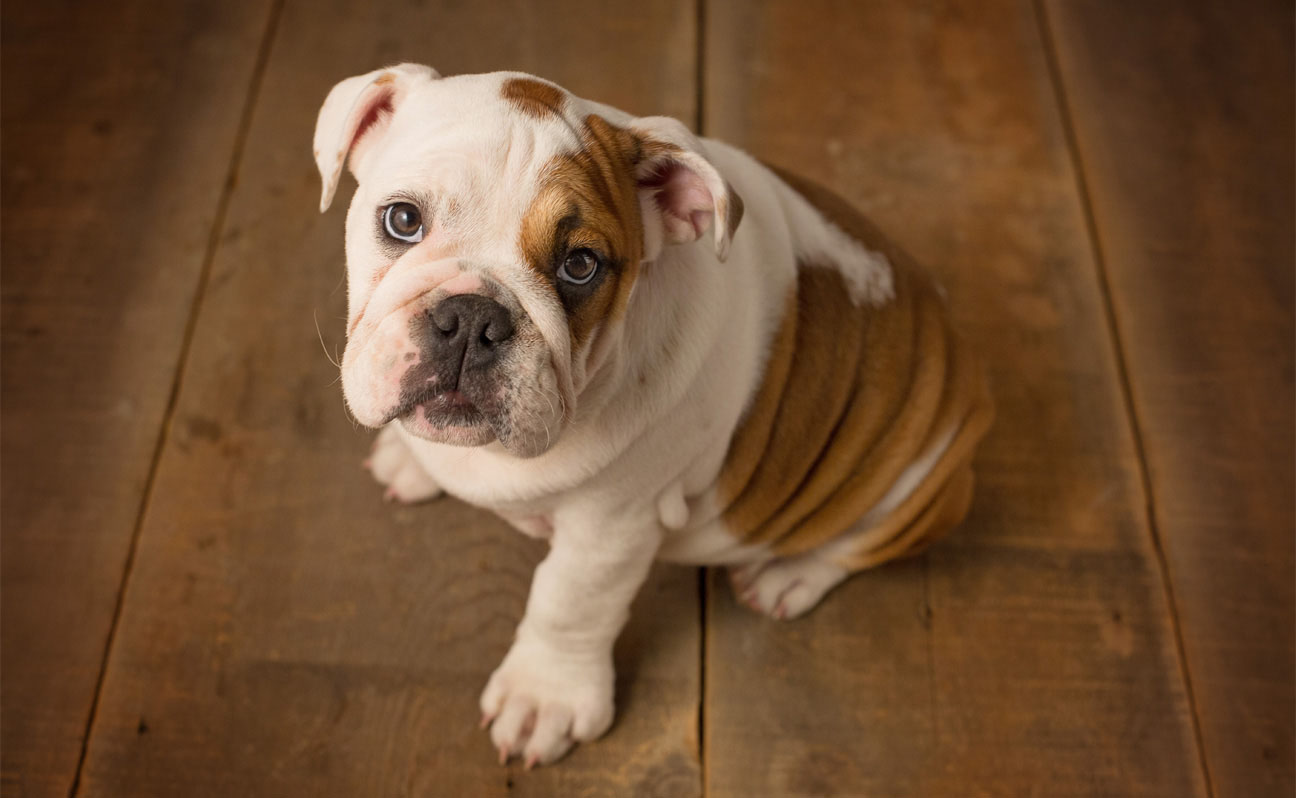 Tulsa-Pet-Portrait-Dog-Photography