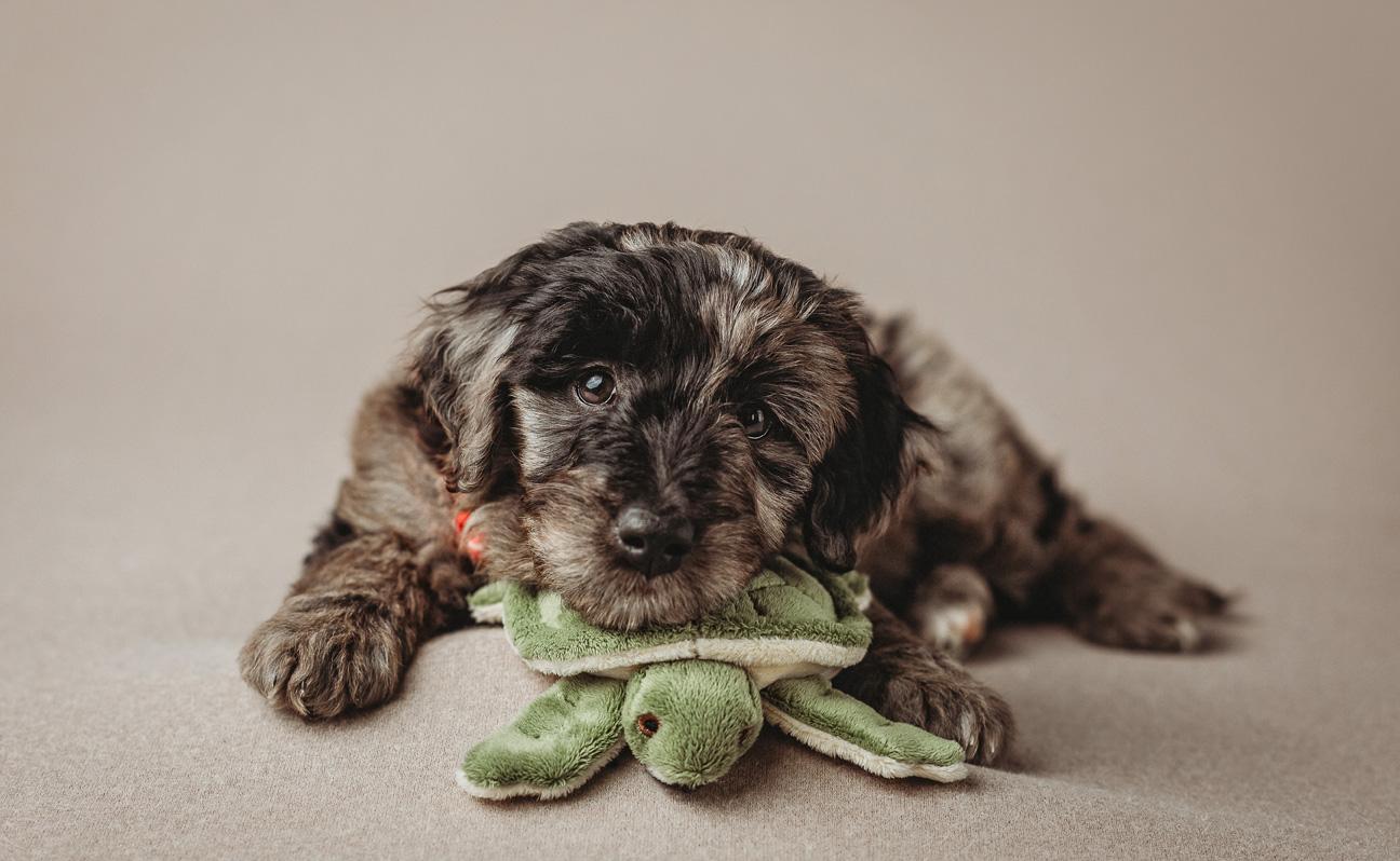 Tulsa Pet Photographer Turtle Plushy